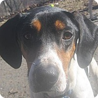 Adopt A Pet :: Mae - Jacksonville, FL