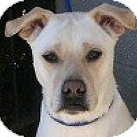 Adopt A Pet :: Andy - Hamilton, ON