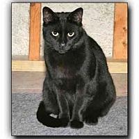 Adopt A Pet :: Evan - Howell, MI