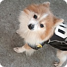 Adopt A Pet :: Gabrielle