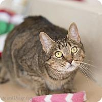 Adopt A Pet :: Stella - Fountain Hills, AZ