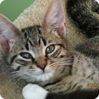 Adopt A Pet :: Winkey - Southington, CT