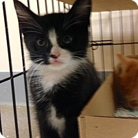 Adopt A Pet :: Orbit - East Brunswick, NJ