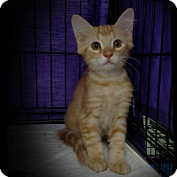Adopt A Pet :: Grace - Richmond, VA