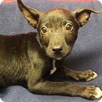 Adopt A Pet :: Milo - Waldorf, MD
