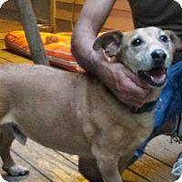 Adopt A Pet :: Moe-Courtesy Post - Alpharetta, GA