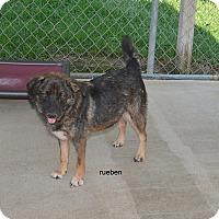 Adopt A Pet :: Reuben - Charlemont, MA