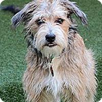 Adopt A Pet :: Milo - Novato, CA