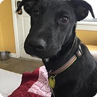 Adopt A Pet :: Coral - Saskatoon, SK