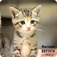 Adopt A Pet :: MARIMBA - Conroe, TX