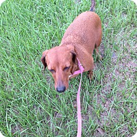 Adopt A Pet :: Roxy - Clermont, FL