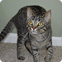 Adopt A Pet :: R Litter - Aphrodite - Williamston, MI