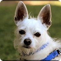 Adopt A Pet :: Gus-Benjamin - Thousand Oaks, CA