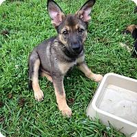 Adopt A Pet :: Sawyer - Greeneville, TN