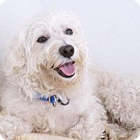 Adopt A Pet :: Telly - Sudbury, MA