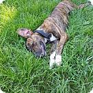 Adopt A Pet :: Destiny