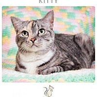 Adopt A Pet :: KITTY - Franklin, TN