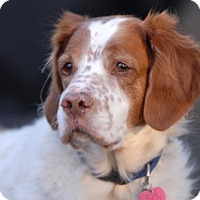 Adopt A Pet :: IA-Hunter - Appleton, WI