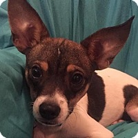 Adopt A Pet :: Chester - Tomball, TX