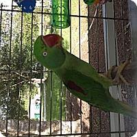 Adopt A Pet :: Jade - Punta Gorda, FL