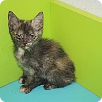 Adopt A Pet :: Ethel - Stilwell, OK