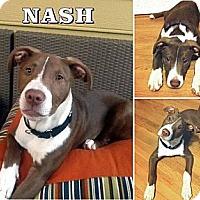 Adopt A Pet :: Nash - Snellville, GA