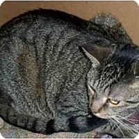 Adopt A Pet :: Baby Girl - Odenton, MD