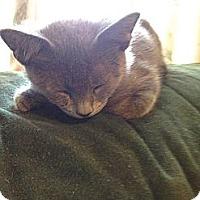 Adopt A Pet :: Max - Westfield, MA