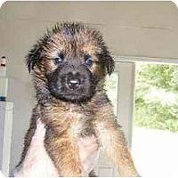 Adopt A Pet :: Porter - Alexandria, VA
