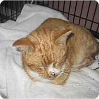 Adopt A Pet :: Flame - Lethbridge, AB