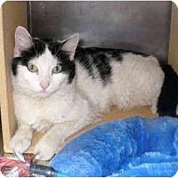 Adopt A Pet :: Lucie - Colmar, PA