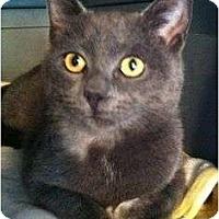 Adopt A Pet :: Smokie - Port Republic, MD
