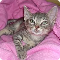 Adopt A Pet :: Petunia - Island Park, NY