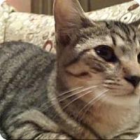 Adopt A Pet :: Rupert - Grand Blanc, MI