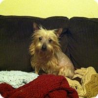 Adopt A Pet :: Elsa - Mount Gretna, PA