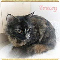 Adopt A Pet :: Traci - Orange City, FL