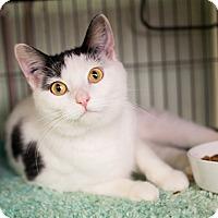 Adopt A Pet :: Annette - Shelton, WA