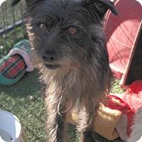 Adopt A Pet :: TOBY - San Pablo, CA