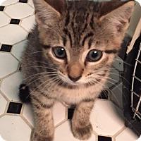 Adopt A Pet :: Heather - Pembroke Pines, FL