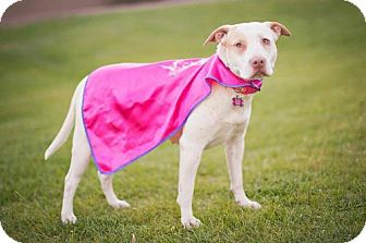 Pit Bull Terrier Mix Dog for adoption in PEORIA, Arizona - Princess