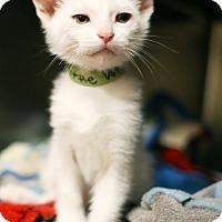 Adopt A Pet :: Little Dot *Petsmart GB* - Appleton, WI