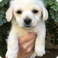 Adopt A Pet :: Wally & Darla - Van Nuys, CA
