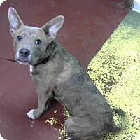 Adopt A Pet :: SNICKERS - Atlanta, GA