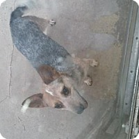 Adopt A Pet :: Matilda - Springfield, OH