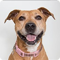 Adopt A Pet :: Kibbs - San Luis Obispo, CA
