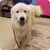 Adopt A Pet :: Matt - Smithtown, NY