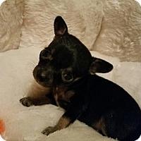 Adopt A Pet :: Odetta - Yreka, CA