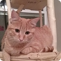 Adopt A Pet :: Tiny Tim - Cedar Springs, MI