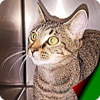 Adopt A Pet :: Billy - Morehead City, NC