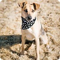 Adopt A Pet :: Sadie - Pueblo, CO